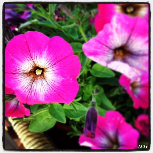 Nærbilde av blomst