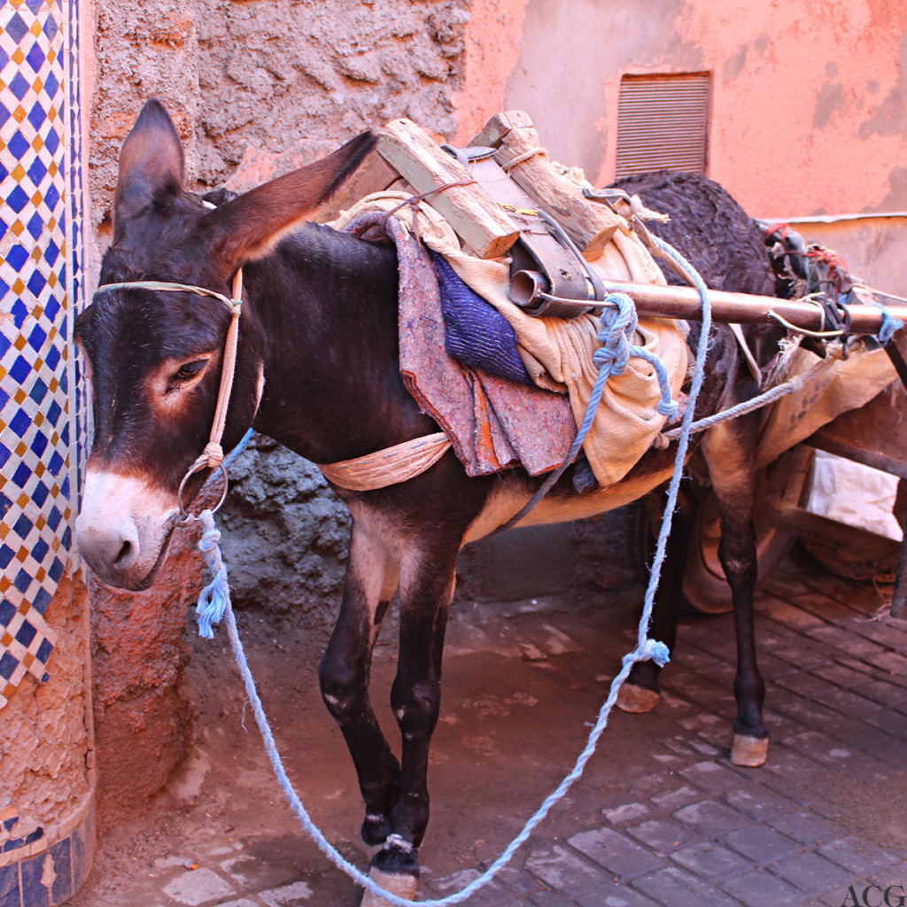 Esel i Marrakech