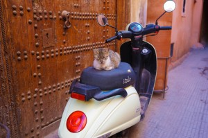 Marrakech 0317 medina katt
